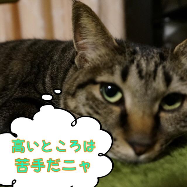 マイペースな猫