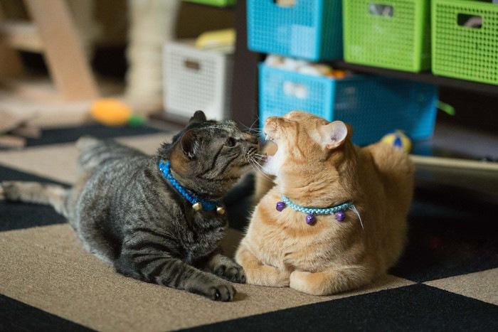 グルーミングする2匹の猫
