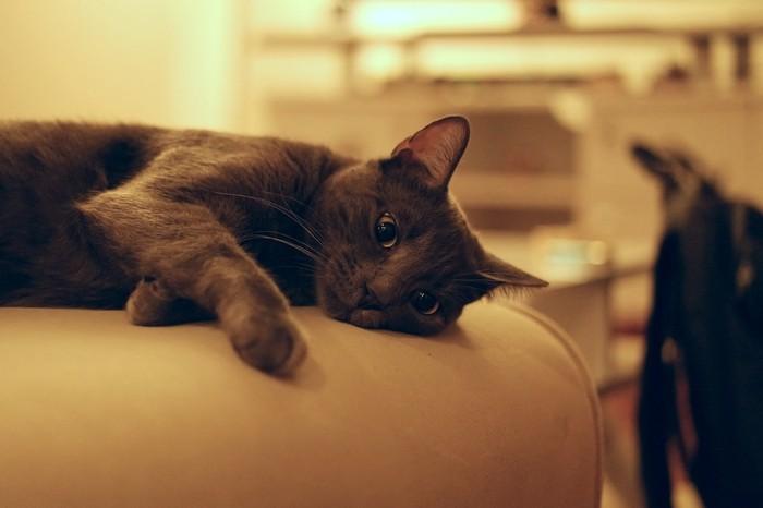 ぐったりする黒猫