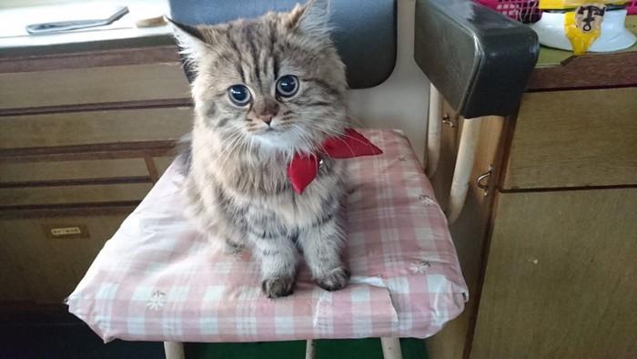 152439778 おもちゃのヨットに入る子猫