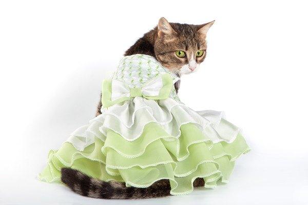 緑のフリルドレスを着た猫