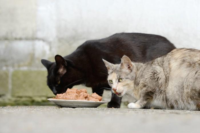 野良猫と餌