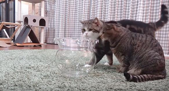 金魚鉢に近づく猫が一匹