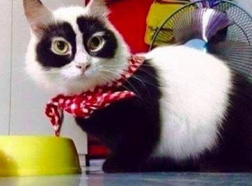 珍しい柄猫12
