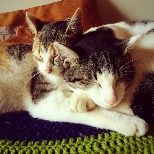 兄弟愛の猫