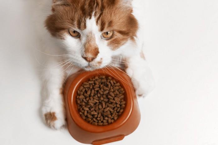 老猫とご飯