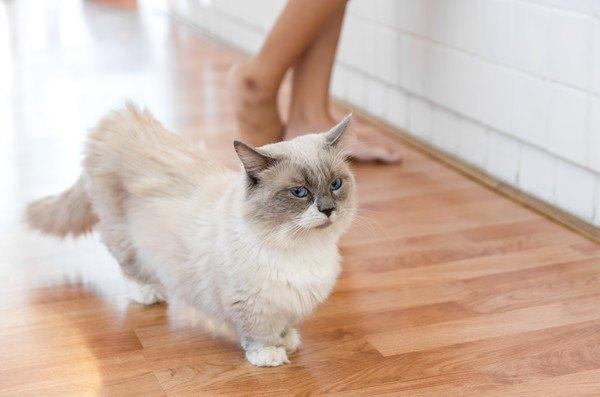 女性の傍にいる白猫