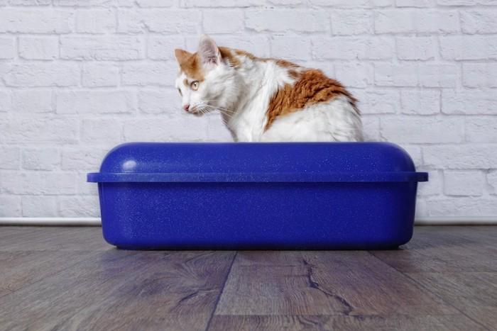 青いトイレに入っている猫