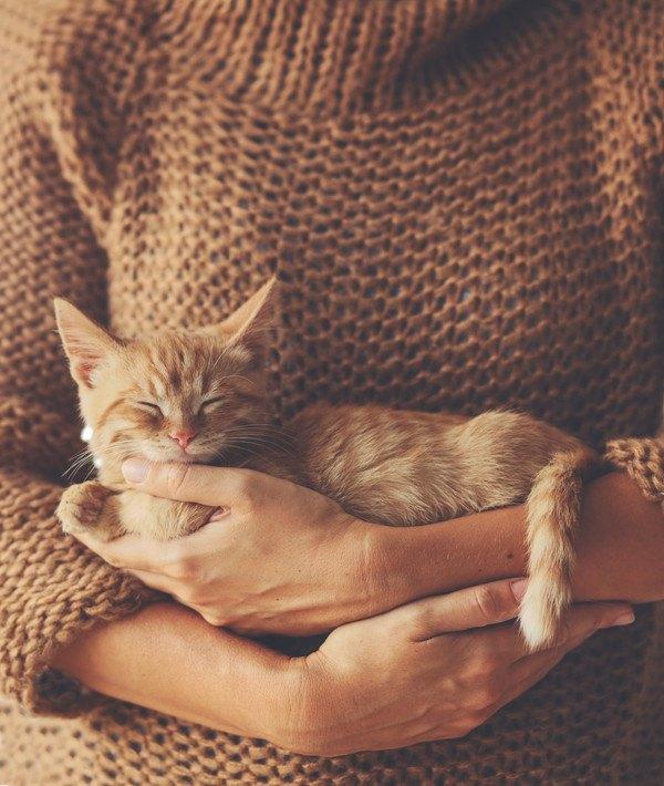 抱っこされるキジ茶色の子猫