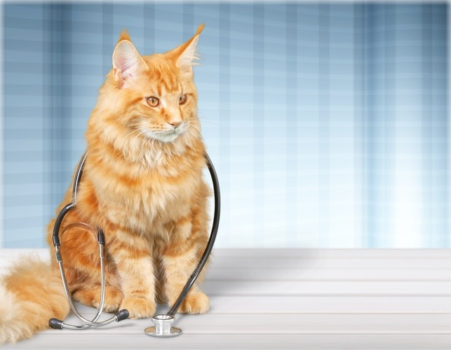 首から聴診器をぶら下げている猫