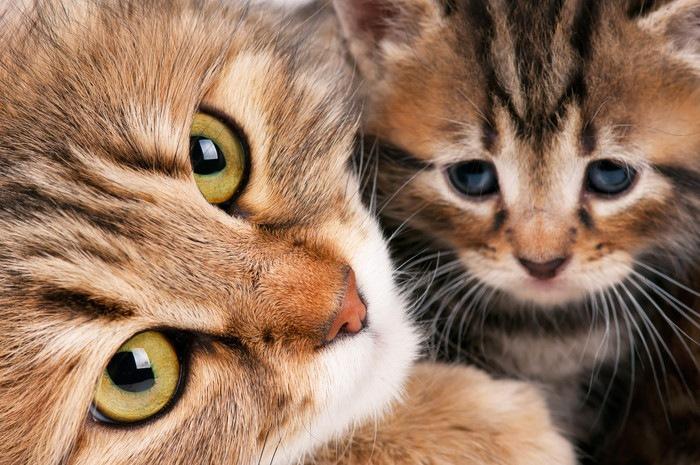 こちらをみる親子猫