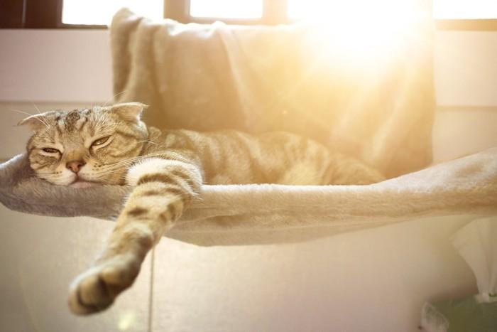 夏用のハンモックで日なたぼっこをする猫