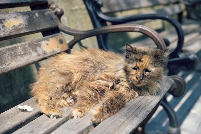 ベンチの上で休む野良猫