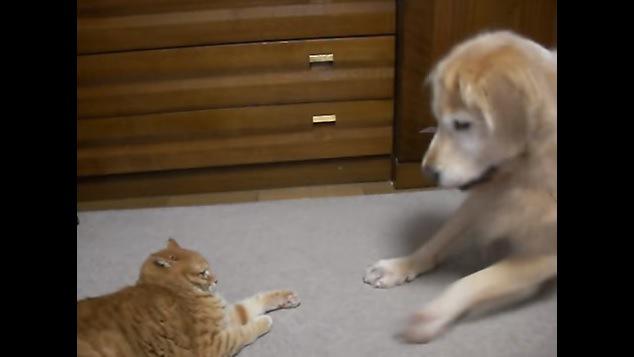 伏せの体勢の猫と犬