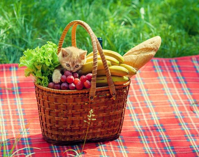 バナナなどの沢山の果物と猫