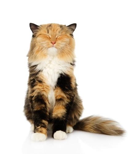 笑顔のような表情で座る猫