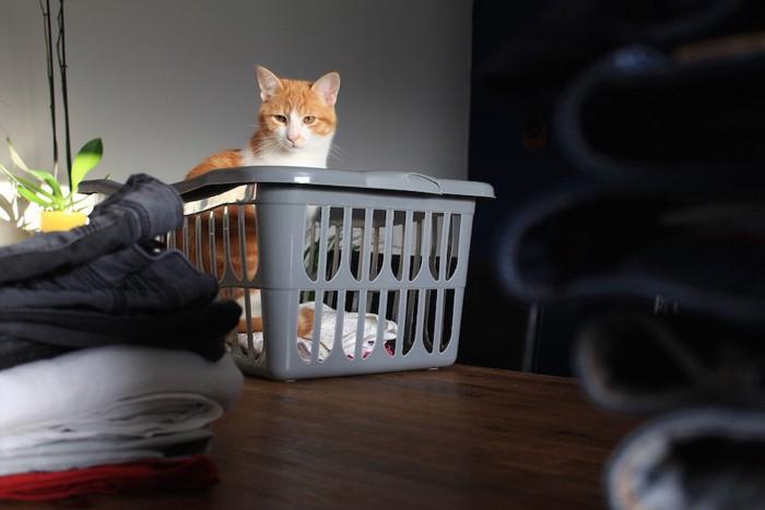 洗濯かごの中でくつろぐ猫