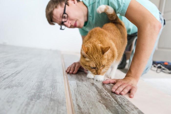 日曜大工をする男性と猫
