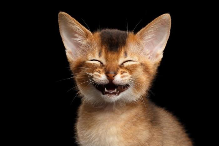 笑っている子猫