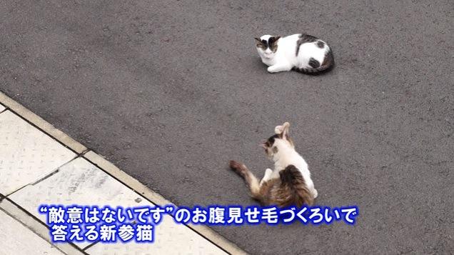 毛づくろいをする猫と見つめる猫
