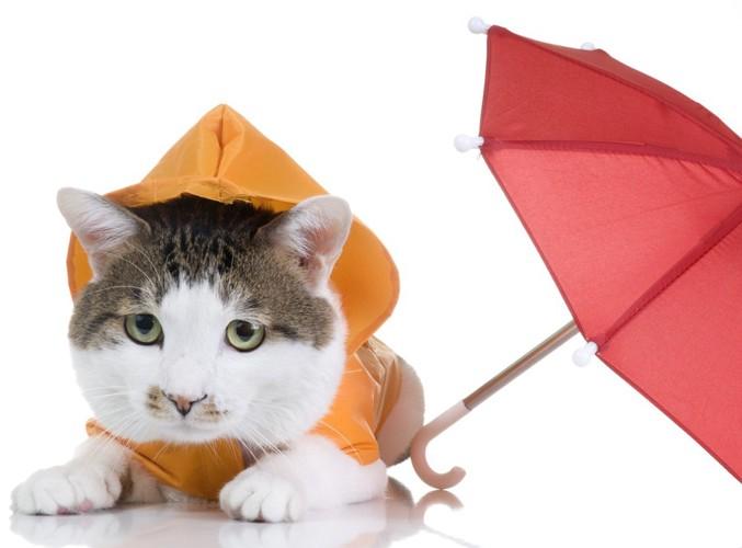 猫と天気予報