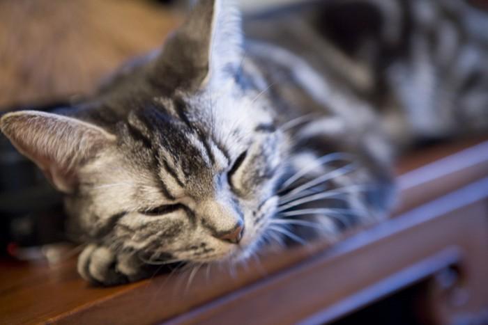 家具の上でリラックスしている猫