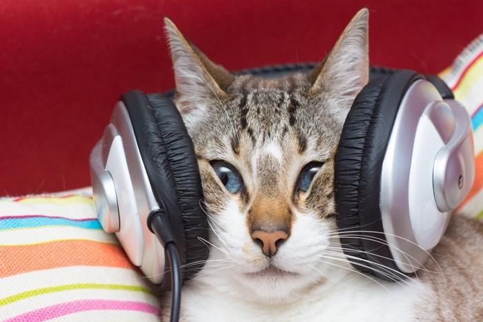 ヘッドフォンに挟まれた猫