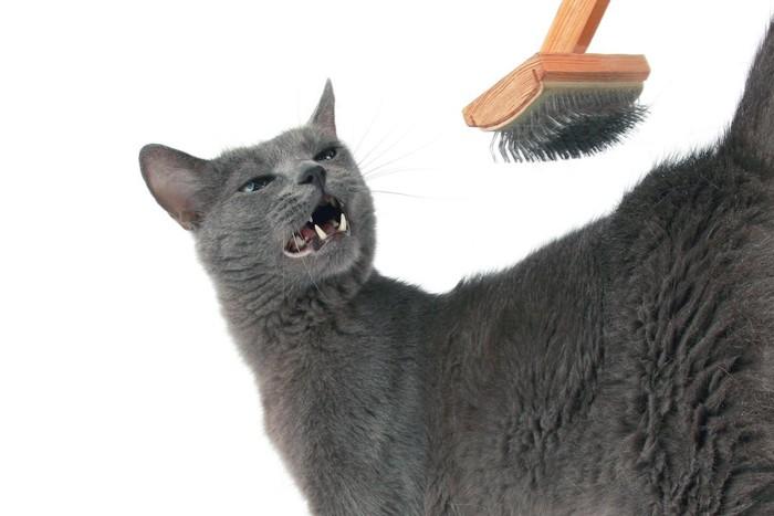 くしのブラッシングを嫌がるグレーの猫