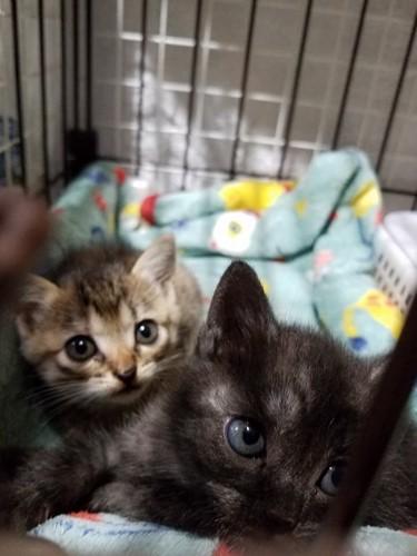 救助された2匹の子猫