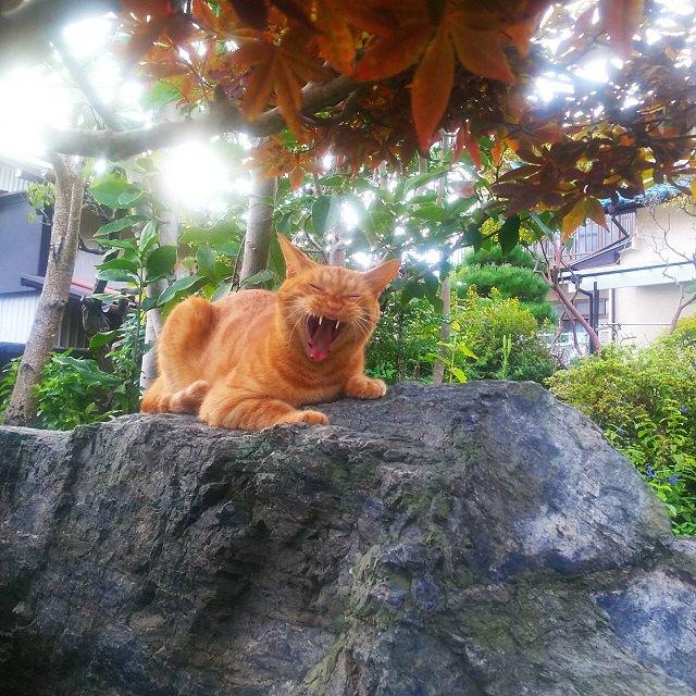 石の上で威嚇ぎみの猫