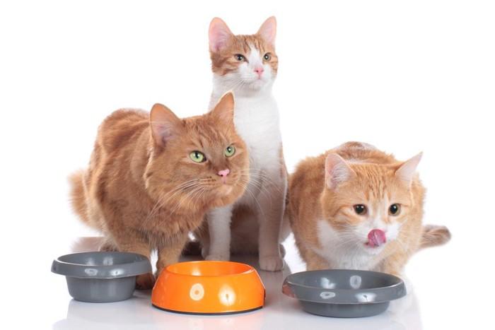 餌を食べる三匹の猫
