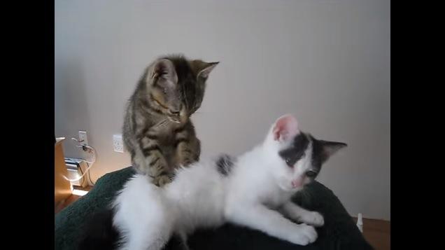 マッサージする猫と眠そうな猫