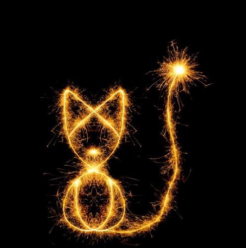 光でかかれた猫
