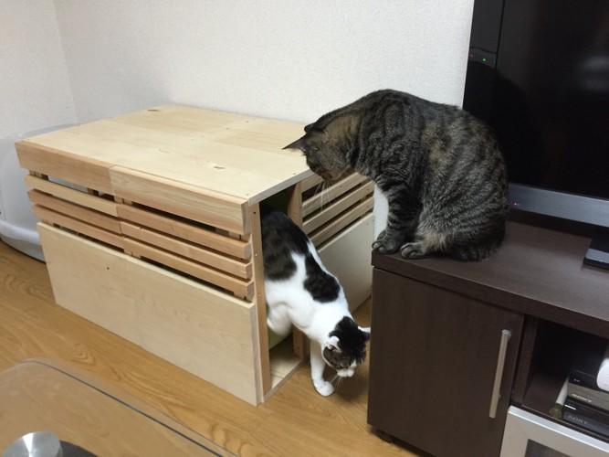 右の扉から出てくる猫さん