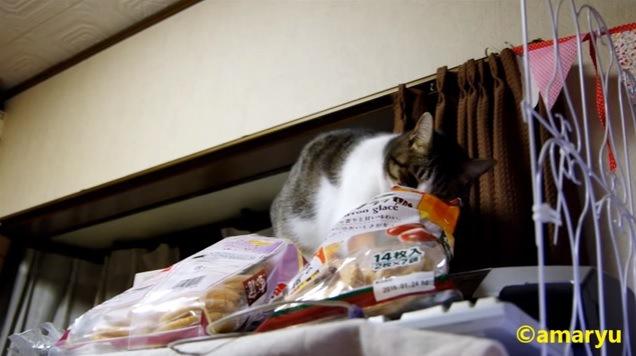 袋に手を入れる猫