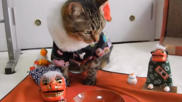 獅子舞に挟まれた猫