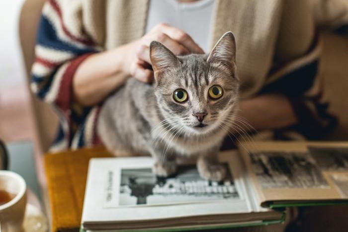アルバムの上に座って撫でられている猫