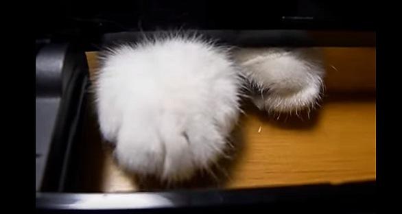 両方見える猫の足