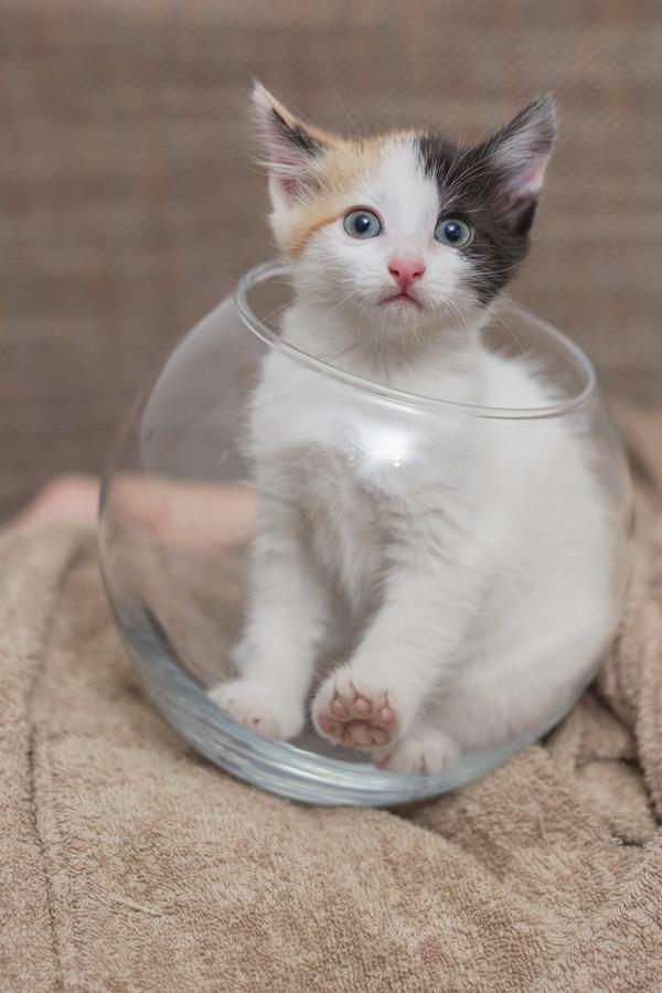 金魚蜂に入る猫