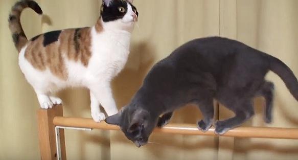 道を譲る黒猫