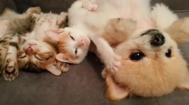 中央の子猫が目覚める