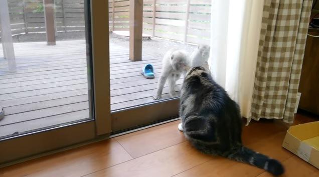 にらめっこする猫と猿
