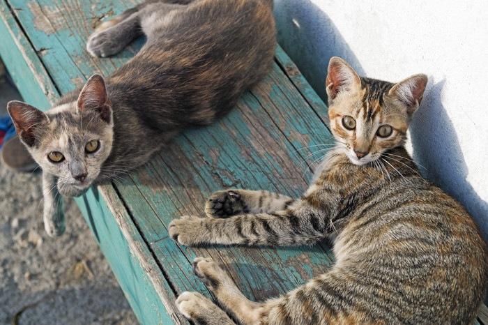 ベンチの上にいる二匹の猫