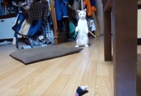 ジャンプをする前には前足を上げる猫