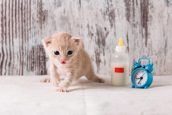 子猫と哺乳瓶と時計