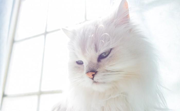 窓辺で日なたぼっこする白猫