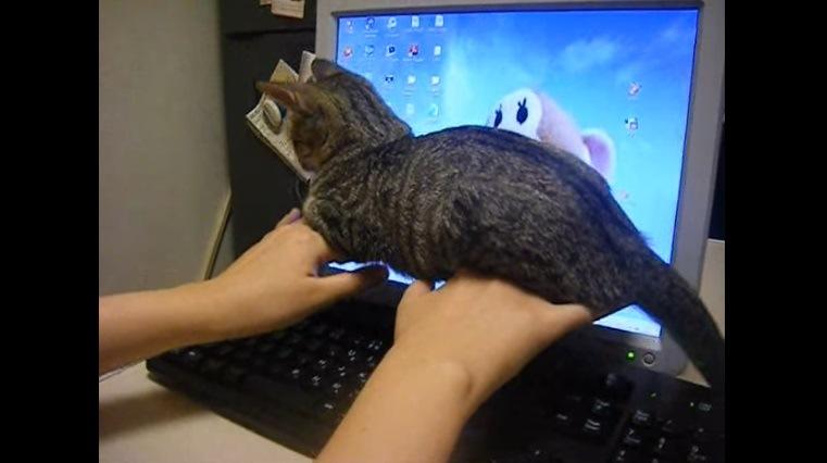 持ち上げられた腕の上の猫