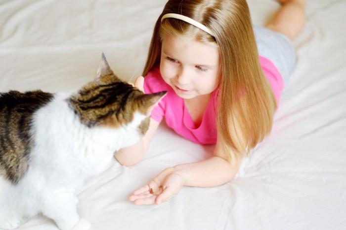 女の子から餌をもらう猫