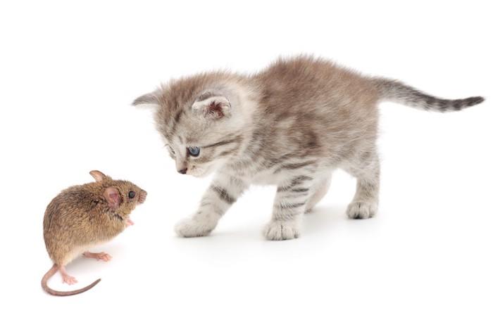 子猫とネズミ
