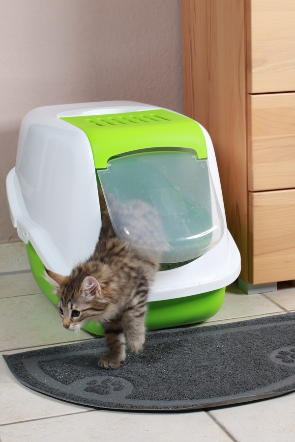トイレからトイレマットの上に出る猫